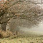 paysage brouillard