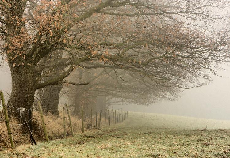 photo photo paysage brouillard