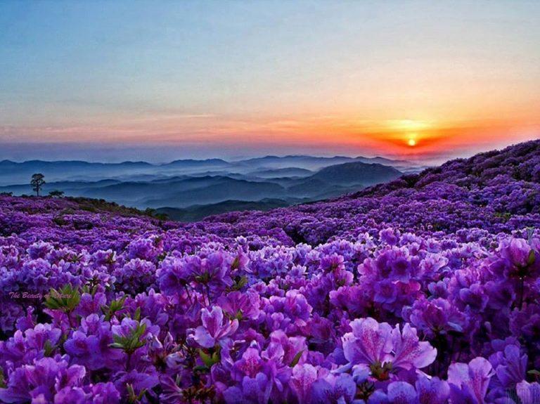 photo paysage fleuri