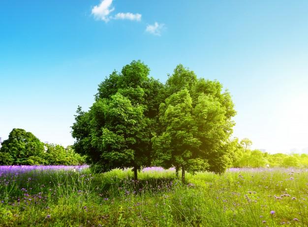 photo paysage naturel