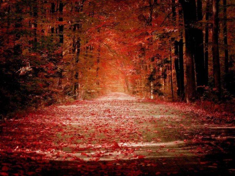 photo photo paysage romantique