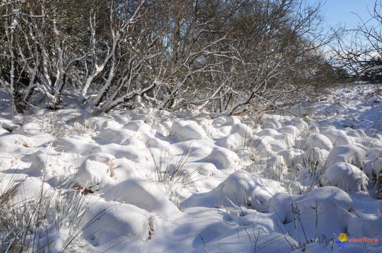 photo image paysage de neige