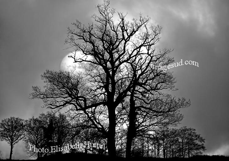 photo paysage en noir et blanc