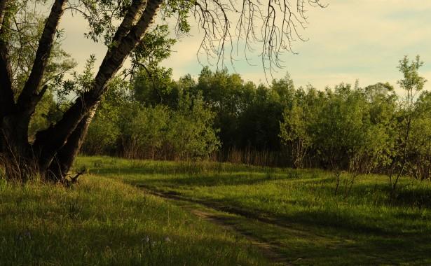 photo image paysage foret